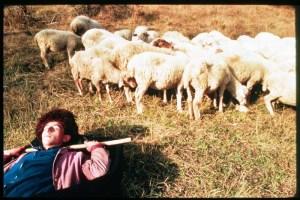 shepherdcolor